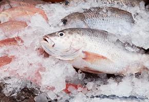 Оборудование для фасовки и упаковки замороженной рыбы