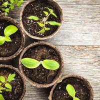 Семена, земля, удобрения