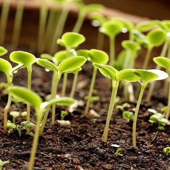 Оборудование для фасовки и упаковки семян